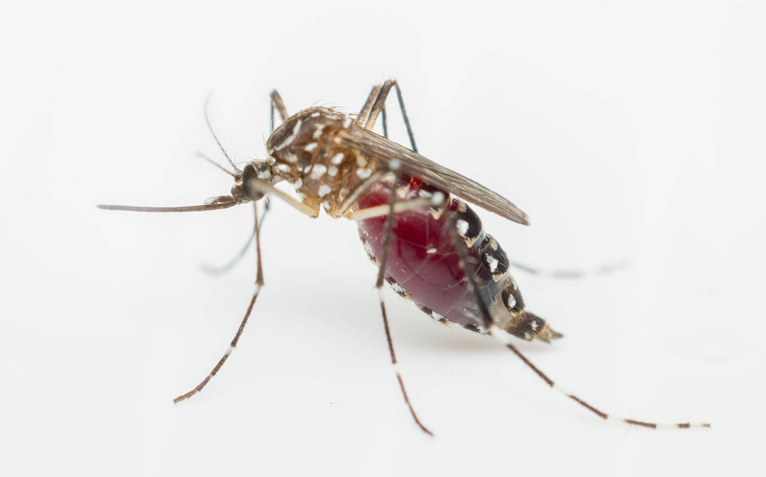 How can yellow fever be prevented?