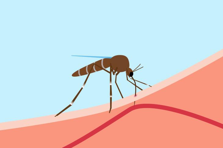 ¿Por qué las picaduras de mosquitos producen tanta necesidad de rascarse?