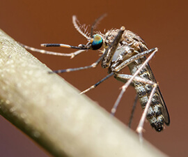 Understanding the Mosquito Life Cycle