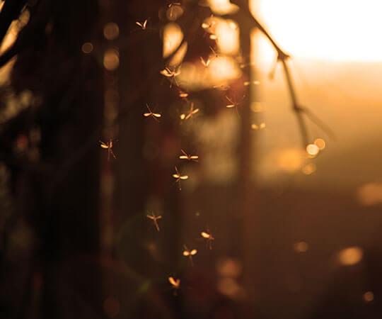 5 fakta mencengangkan seputar nyamuk
