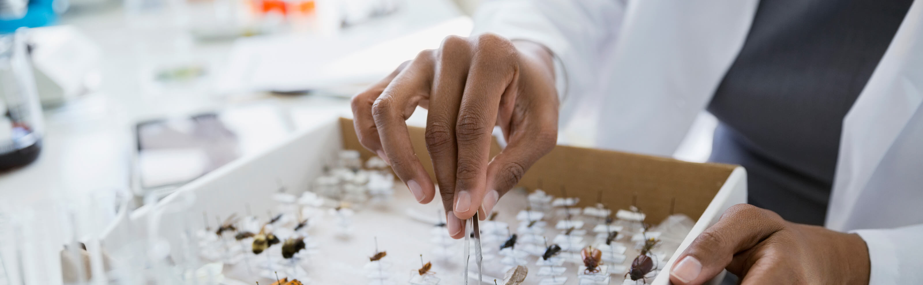 insects 101