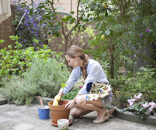avoid these 6 beginning gardening mistakes